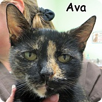 Adopt A Pet :: Ava - Warren, PA