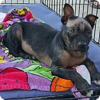 Adopt A Pet :: Kaytu - Sacramento, CA