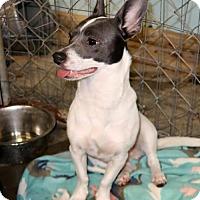 Adopt A Pet :: Honey Bun - Rockingham, NH
