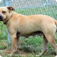 Adopt A Pet :: Vanna   only $10 fee! - Lincolnton, NC