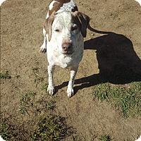 Adopt A Pet :: Ernie - Indianola, IA