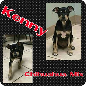 Chihuahua Mix Puppy for adoption in Harrisburg, North Carolina - Kenny