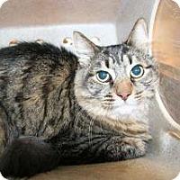 Adopt A Pet :: Sonja - Wildomar, CA