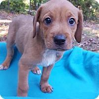 Adopt A Pet :: W&M Griffin - Alexandria, VA