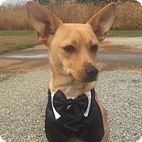 Adopt A Pet :: Jax - Essington, PA
