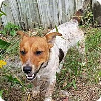 Adopt A Pet :: Kirby - Bradenton, FL