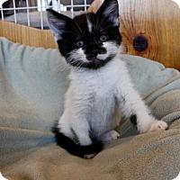 Adopt A Pet :: Belmont - Polson, MT
