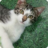 Adopt A Pet :: Yahoo - Romeoville, IL