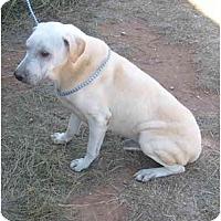 Shar Pei Mix Dog for adoption in Anton, Texas - Skyler