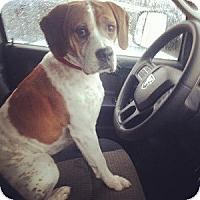 Adopt A Pet :: Jep - Hamilton, ON