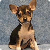 Adopt A Pet :: Midge - Sacramento, CA