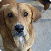 Adopt A Pet :: Jules - Worcester, MA