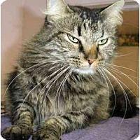 Adopt A Pet :: Danbury - El Cajon, CA