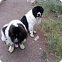 Adopt A Pet :: Zane & Zee - Silverthorne, CO