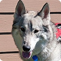 Adopt A Pet :: RIGGS-Adoption Pending - Boise, ID