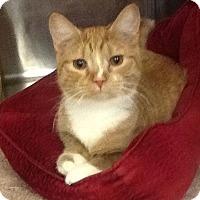 Adopt A Pet :: Cody - Colmar, PA