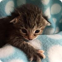 Adopt A Pet :: Polly - Union, KY