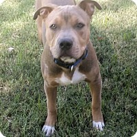 Adopt A Pet :: Bruno - Scottsdale, AZ