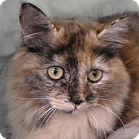 Adopt A Pet :: Miranda - Redondo Beach, CA