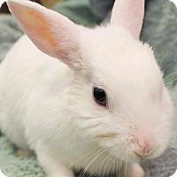 Adopt A Pet :: Bean - Hillside, NJ