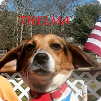 Adopt A Pet :: THELMA - Ventnor City, NJ