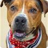 Adopt A Pet :: DASH (ECAS Kennel A5) - Pleasanton, CA