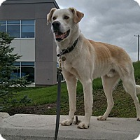 Adopt A Pet :: Colin - High River, AB