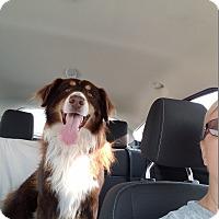 Adopt A Pet :: ROWDY ROPER - Gustine, CA