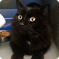 Adopt A Pet :: Courage (in CT) - Manchester, CT