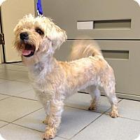 Adopt A Pet :: KoKo - Keswick, ON