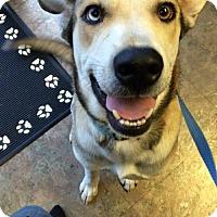 Adopt A Pet :: Kaylan - Glen Burnie, MD