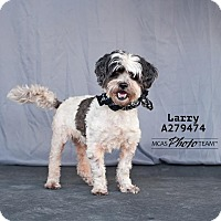 Adopt A Pet :: LARRY - Conroe, TX