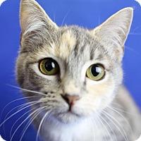 Adopt A Pet :: Primrose - Winston-Salem, NC