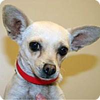 Adopt A Pet :: Chiquita - Wildomar, CA
