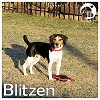 Adopt A Pet :: Blitzen - Pittsburgh, PA