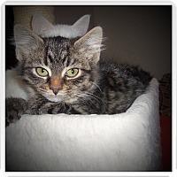 Adopt A Pet :: BREXA - Medford, WI