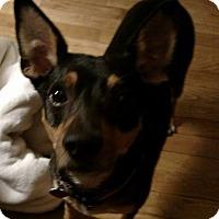 Adopt A Pet :: Cracker - Laingsburg, MI