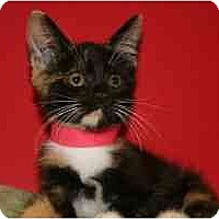 Adopt A Pet :: LUCY - SILVER SPRING, MD