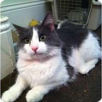 Adopt A Pet :: Sydnie - Phoenix, AZ