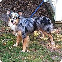 Adopt A Pet :: Skye - Columbia, SC