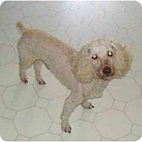 Adopt A Pet :: Sammy - Bowie, TX