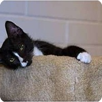 Adopt A Pet :: Squiggles - New Port Richey, FL