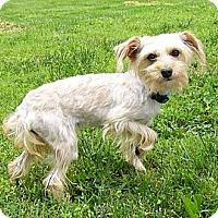Adopt A Pet :: Collins - Mocksville, NC