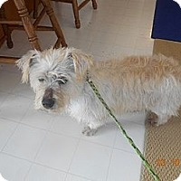 Adopt A Pet :: Mikey - Wellington, OH