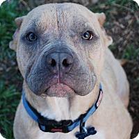 Adopt A Pet :: Titus - Parker, CO