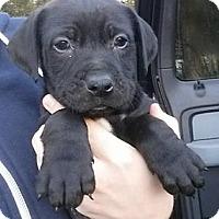 Adopt A Pet :: Mario - Gainesville, FL