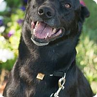 Adopt A Pet :: Cici - Gainesville, FL