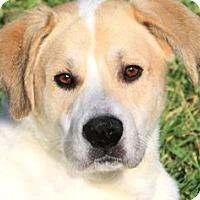 Adopt A Pet :: SUNNY(A FAMILIES BEST FRIEND! - Wakefield, RI