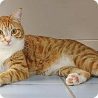Adopt A Pet :: Blake - Roseville, CA