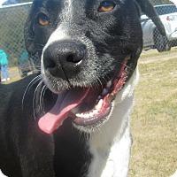 Adopt A Pet :: Ducky - Darien, GA